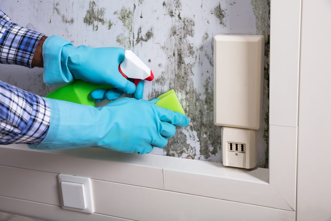 How to clean mold: the fight against the insidious enemy